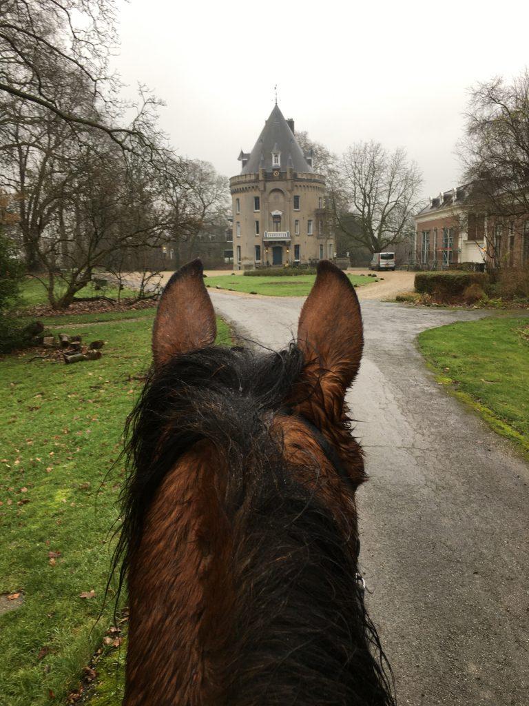 video lessen paardrijden