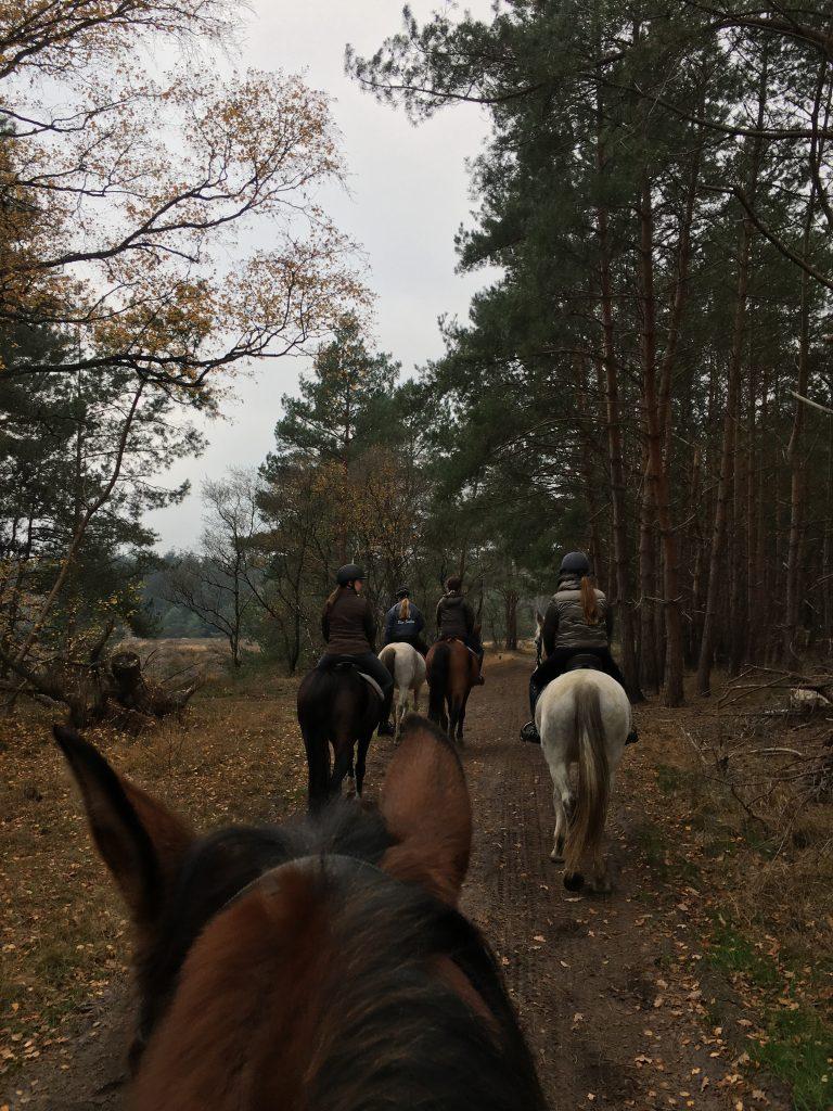 ponykamp voor volwassenen